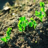 土壤质量检测(基本项目)