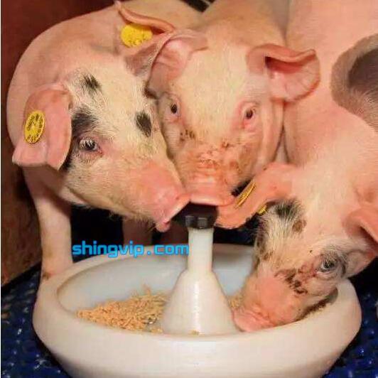 猪饲料检测
