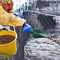 草鱼饲料检测