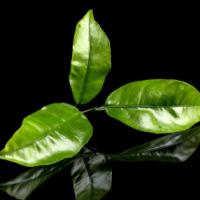 佛山茶叶检测部门,茶叶成分和农残检测单位