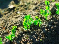 土壤碲含量检测及现状分析