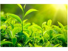 GB/T 38208-2019 农产品基本信息描述 茶叶 检测标准
