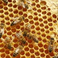 广州市蜂蜜掺假检测,广州市蜂蜜质量检测报告