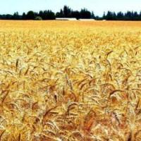 杭州粮食 谷物 大米检测一下需要多少钱