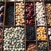 广州豆类产品检测报告,大豆进驻超市质检报告
