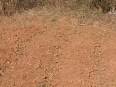 土壤中重金属镉元素的测定