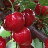 广州樱桃,葡萄,草莓农残检测_商超进驻测试